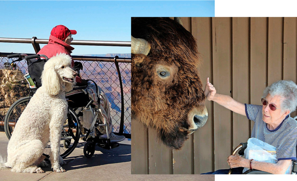 Sie geniesst die Aussicht auf den Grand Canyon. Immer  an Normas Seite ist ihr treuer Therapiehund Ringo. Rehts: Auch vor grossen Tieren in Zoos zeigte Norma keine Berührungsängste.
