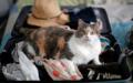 «Verlasst mich nicht», denkt diese Katze wohl. Leichter ist es, wenn bei Ferien-Abwesenheit gut für sie gesorgt ist.