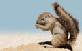 Eingebauter Sonnenschirm! Das Borstenhörnchen, hier ein Exemplar aus dem Zoo Basel, schützt sich mit seinem Schwanz vor der Hitze. Ist die Sonne stark, stellt es den Schwanz auf und spendet sich so selbst Schatten. Die Nager sind in den Steppen und Savannen Südafrikas heimisch.