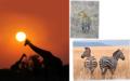 Platz 1) Grosses Bild: «Spiel mit der Sonne» nennt Marianne Savina-Baeriswyl ihr Giraffen-Bild. Die faszinierende Wildnis Namibias berührte sie. «Ein grandioses Schauspiel, das uns mit ehrfürchtiger Dankbarkeit erfüllt.» Platz 2) Oben: Auf der Suche nach dem Abendessen: «Die Dämmerung ist angebrochen, und die Jagd der Leopardin beginnt», schreibt Jonathan Weber zum Foto, das er in Tansania aufgenommen hat. Platz 3) Rechts: Noch ein Abstecher nach Afrika: Ob diese Zebras die Schönheit ihrer Heimat erkennen? Fast scheint es so. Jean-Pierre Mundwiler begegnete ihnen auf seiner Safari-Tour durch Tansania.