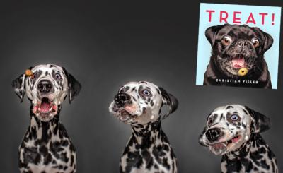 Hoppla! Fein? Jaaaa! Dalmatiner Snoep geht durch ein Wechselbad der Gefühle. Im Buch «Treat!» von Christian Vieler (Hachette Books) gibt es noch viele lustige «Leckerli-Bilder» mehr.