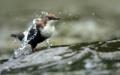 Eine gute Wasserqualität und naturbelassene Gewässer sind für die Vögel immens wichtig.