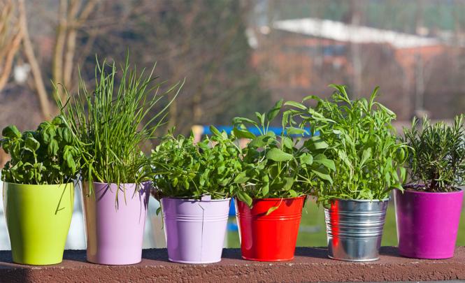 Grüne Heiler Vom Balkonsims Glückspost